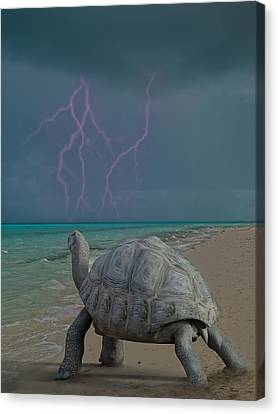 The Wonders Of Mother Nature Canvas Print by Betsy Knapp