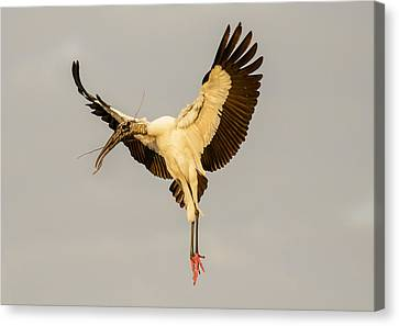 The Wood Stork Angel Canvas Print