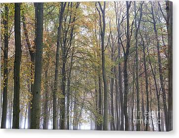 Mystical Landscape Canvas Print - The Woodland Realm by Tim Gainey