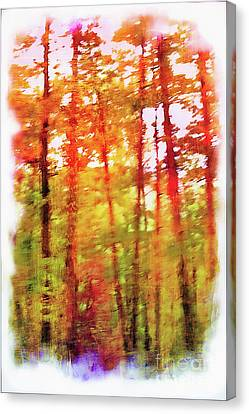 The Woods In Autumn Canvas Print by Judi Bagwell