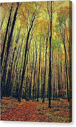 Canvas Print featuring the photograph The Woods In The North by Michelle Calkins