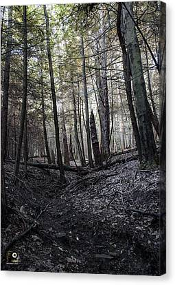 Thewoods Canvas Print - The Woods by Scott Heffner