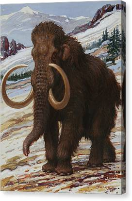The Woolly Mammoth Is A Close Relative Canvas Print by Charles R. Knight