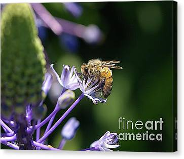 The Working Bee 03 Canvas Print by Arik Baltinester