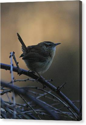 The Wren Canvas Print