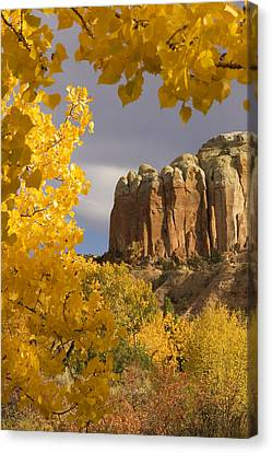 The Yellow Leaves Of Fall Frame A Rock Canvas Print by Ralph Lee Hopkins