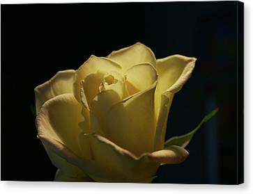Canvas Print featuring the photograph The Yellow Rose by Sheryl Thomas