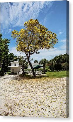 Canvas Print - The Yellow Tree by Scott Pellegrin