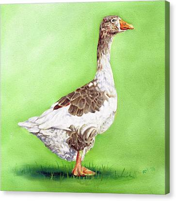 The Young Goose Canvas Print by Richard Mountford