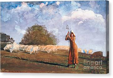 The Young Shepherdess Canvas Print by Winslow Homer