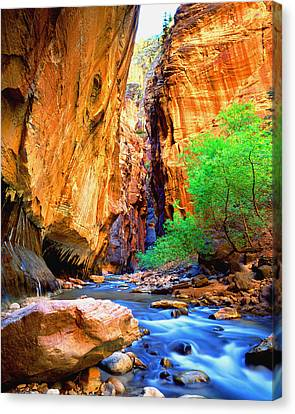 The Zion Narrows Canvas Print