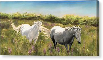 Thelma And Louise Connemara Ponies Canvas Print by Vanda Luddy