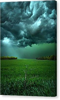 Red Leaf Canvas Print - There Came A Wind by Phil Koch