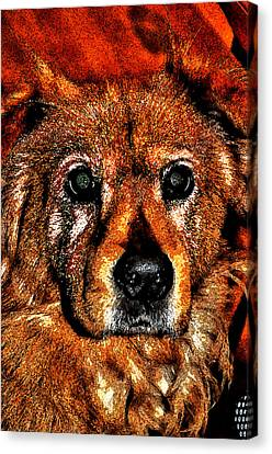 These Eyes Canvas Print by William Jones