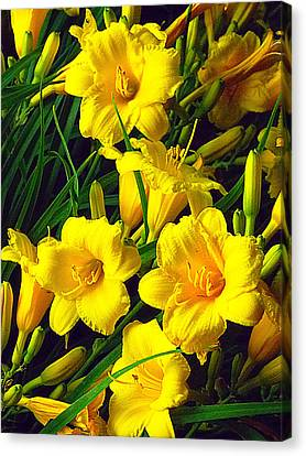 Canvas Print - These Golden Flowers by Guy Ricketts
