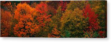 These Shows The Autumn Colors Canvas Print by Panoramic Images