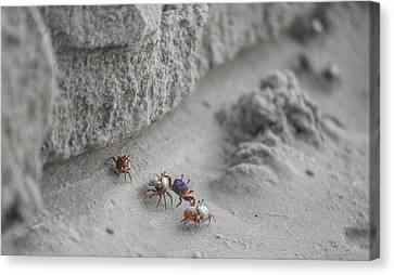 Critter Canvas Print - They'll Never Find Us Here by Betsy Knapp