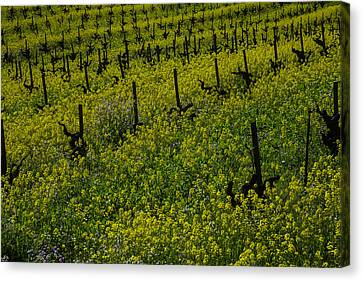 Sonoma County Canvas Print - Thick Lush Mustard Grass by Garry Gay