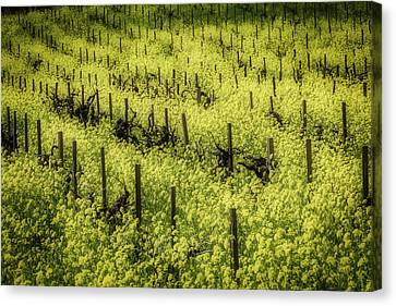 Thick With Mustard Grass Canvas Print
