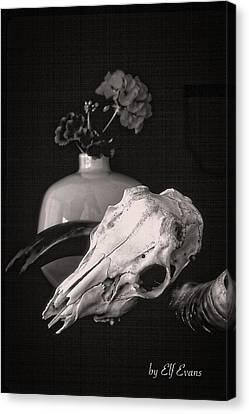 Canvas Print featuring the photograph Thinking Of Georgia O'keeffe by Elf Evans