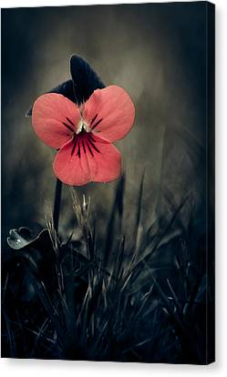 Thinking Pansy Canvas Print by Loriental Photography