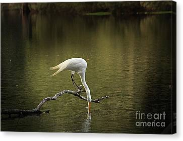 Canvas Print featuring the photograph Thirst by Kim Henderson