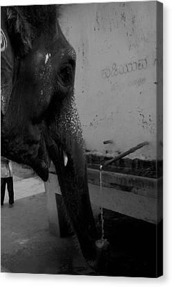 Thirsty Elephant Canvas Print by Deepak Pawar