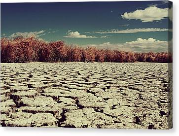 Thirsty Canvas Print by Laurie Search