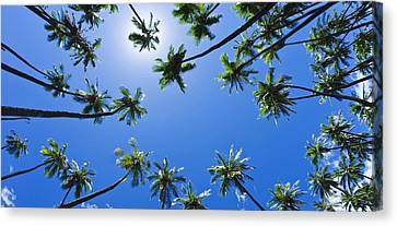 Palms Overhead Canvas Print by Sean Davey