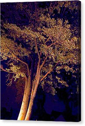 Canvas Print - This Difficult Tree by Guy Ricketts