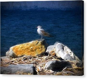 This Gull Has Flown Canvas Print