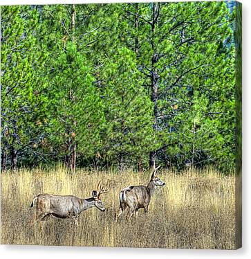 This Is British Columbia 14 - Two And Three Points Canvas Print by Paul W Sharpe Aka Wizard of Wonders