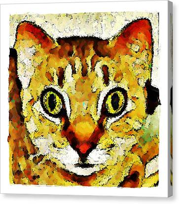 This Is My Surprised Face Kitty Canvas Print by Terry Mulligan