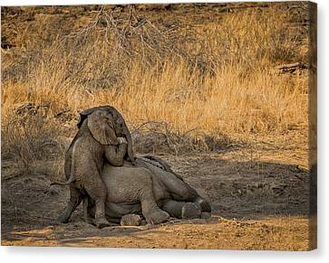 This Is Namibia No.  4 - Come On Bro I Wanna Play Canvas Print by Paul W Sharpe Aka Wizard of Wonders