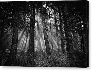 This Is Our World - No.1 - Forest Floor Morning Mist Bw Canvas Print by Paul W Sharpe Aka Wizard of Wonders