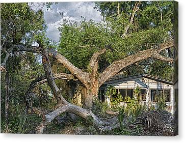 Us1 Canvas Print - This Old House And Tree by Louise Hill