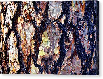 This Old Skin Canvas Print by Donna Blackhall