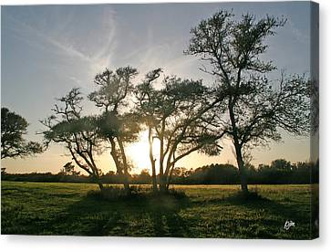 Canvas Print featuring the photograph This One Is For You by Phil Mancuso