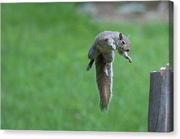 This Squirrel Can Fly Canvas Print by Dan Friend