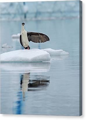 Canvas Print featuring the photograph This Way by Tony Beck