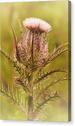 Thistle And Thorns Unfolding Canvas Print