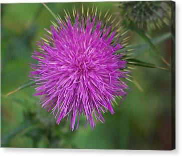 Canvas Print featuring the photograph Thistle by Angi Parks