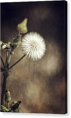 Thistle Canvas Print by Carolyn Marshall