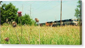 Thistle Rail Canvas Print by Jame Hayes