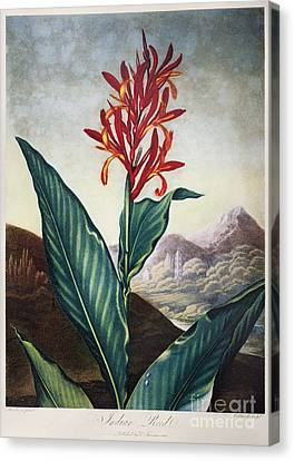 Thornton: Indian Reed Canvas Print