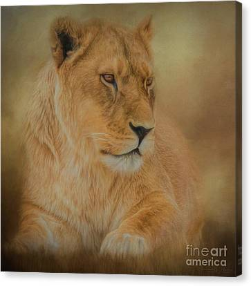 Thoughtful Lioness - Square Canvas Print