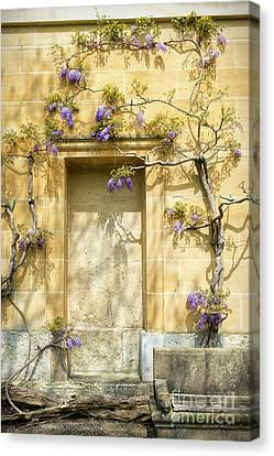 Threads Of Wisteria Canvas Print