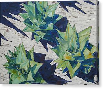 Three Aloe Canvas Print by Karen Doyle