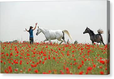 Three At The Poppies' Field Canvas Print