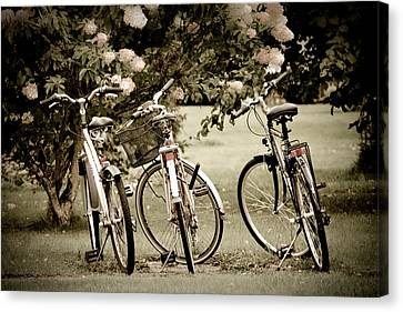 Three Bicycles Canvas Print by Maggie Terlecki